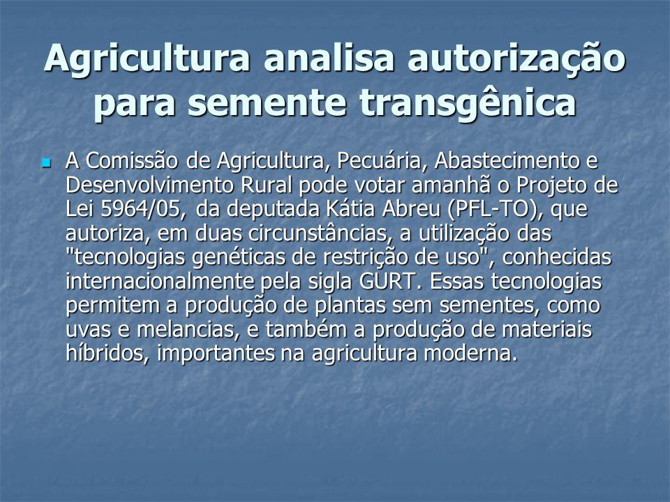 Agricultura analisa autorização para semente transgênica