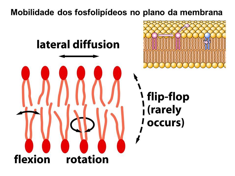 Mobilidade dos fosfolipídeos no plano da membrana