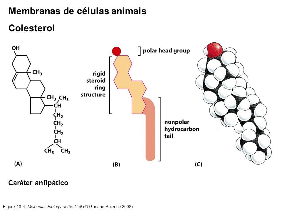 Membranas de células animais Colesterol