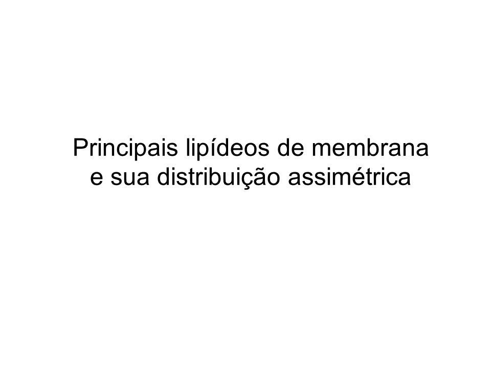 Principais lipídeos de membrana e sua distribuição assimétrica