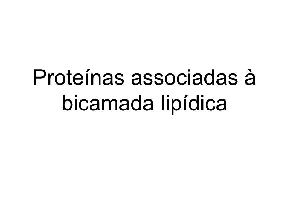 Proteínas associadas à bicamada lipídica
