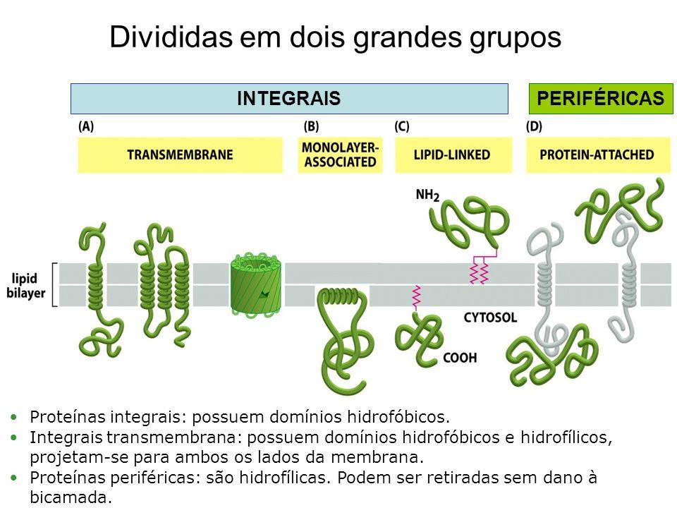 Divididas em dois grandes grupos