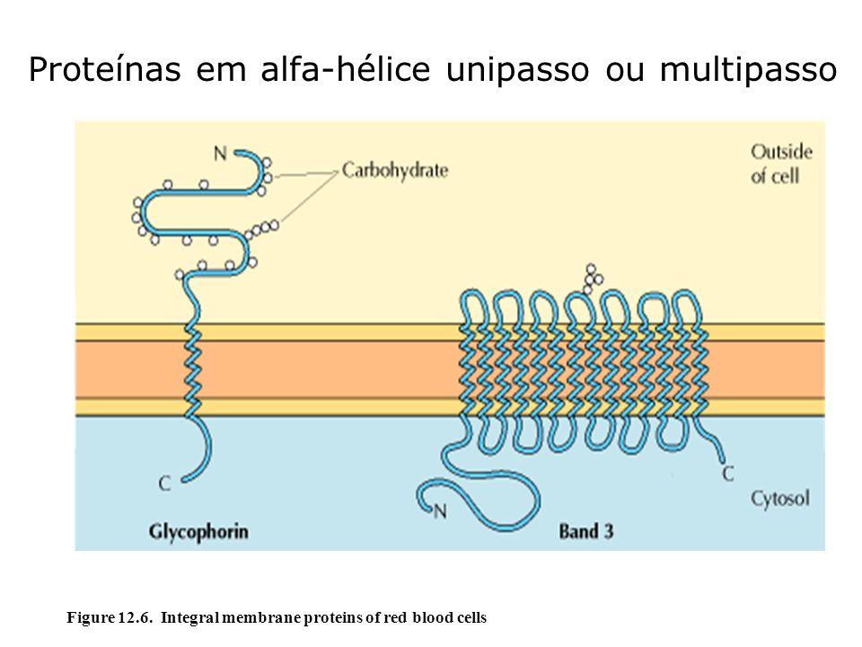 Proteínas em alfa-hélice unipasso ou multipasso