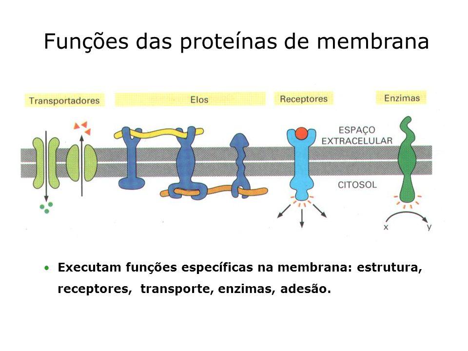 Funções das proteínas de membrana