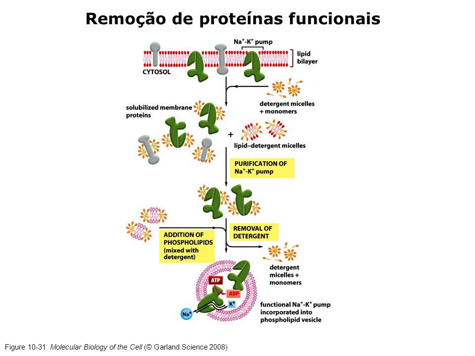 Remoção de proteínas funcionais
