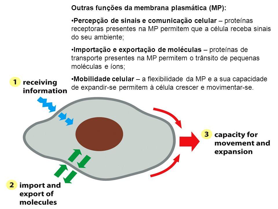 Outras funções da membrana plasmática (MP):