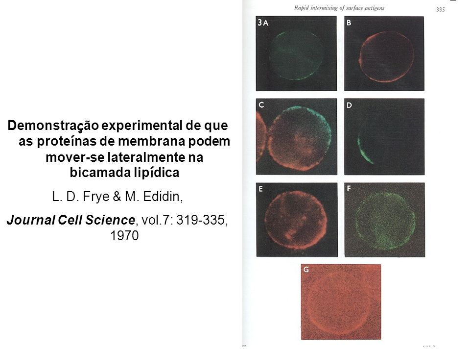 Journal Cell Science, vol.7: , 1970