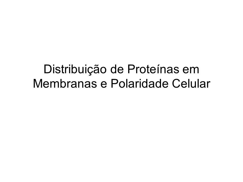 Distribuição de Proteínas em Membranas e Polaridade Celular