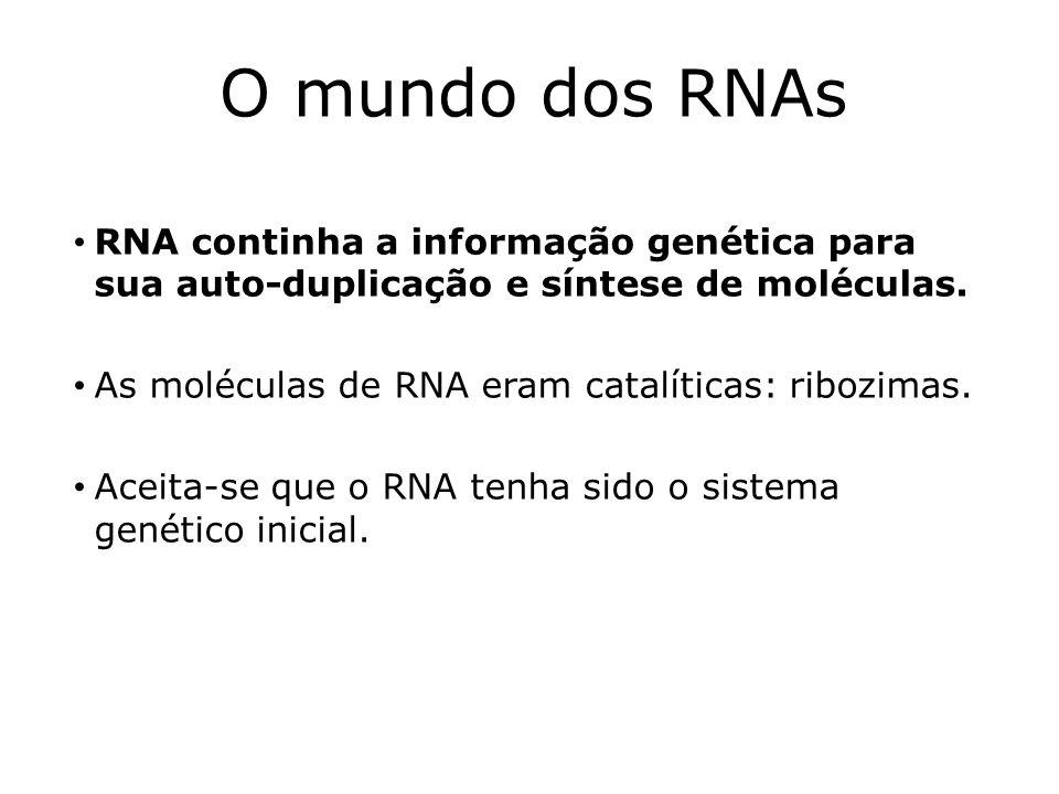 O mundo dos RNAs RNA continha a informação genética para sua auto-duplicação e síntese de moléculas.