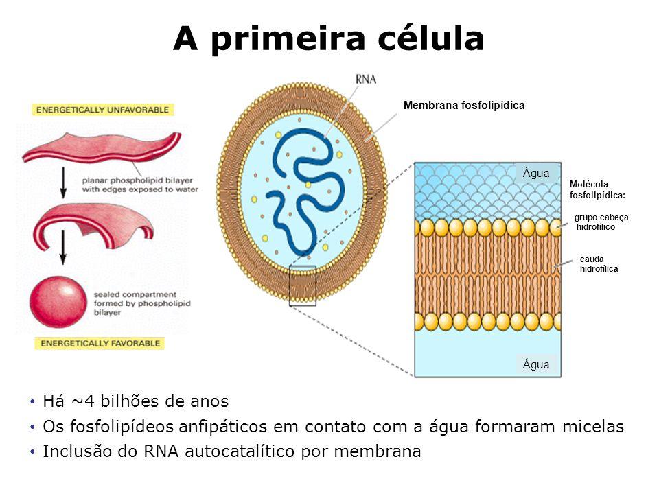 A primeira célula Há ~4 bilhões de anos