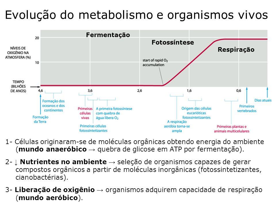 Evolução do metabolismo e organismos vivos
