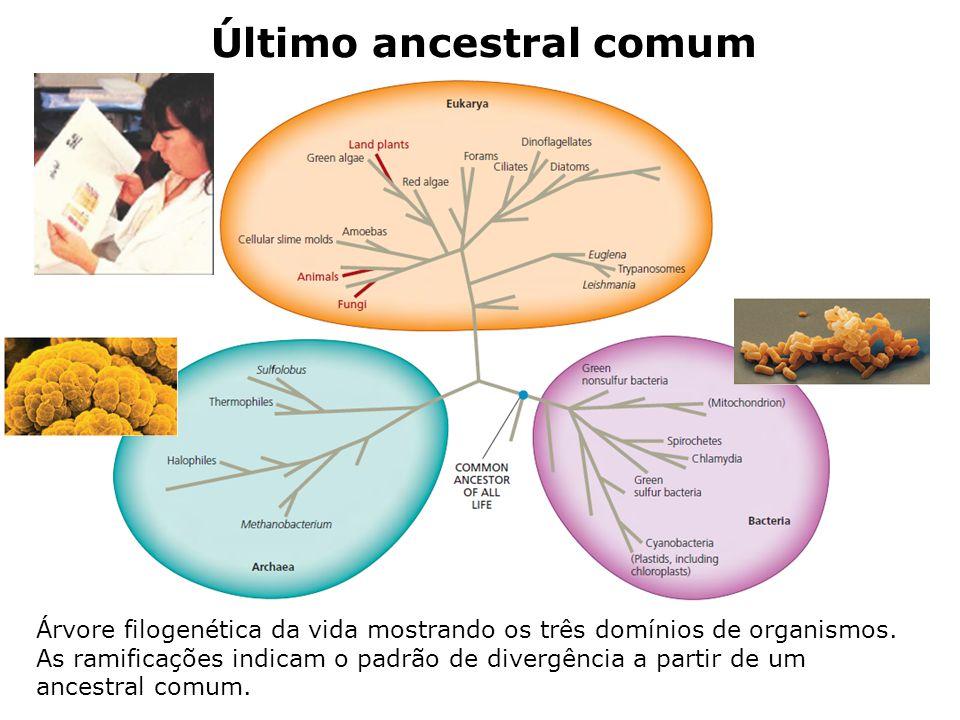 Último ancestral comum