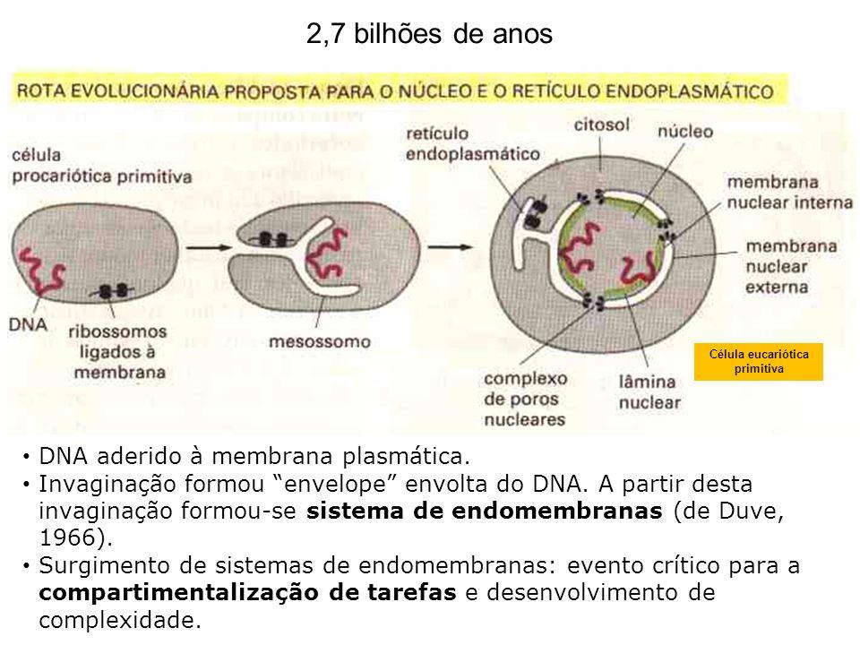 Célula eucariótica primitiva
