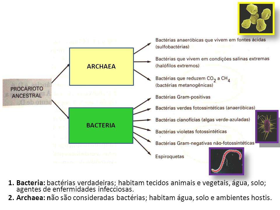 ARCHAEABACTERIA. Bacteria: bactérias verdadeiras; habitam tecidos animais e vegetais, água, solo; agentes de enfermidades infecciosas.