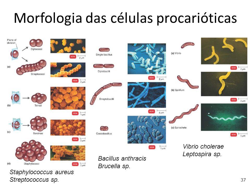 Morfologia das células procarióticas