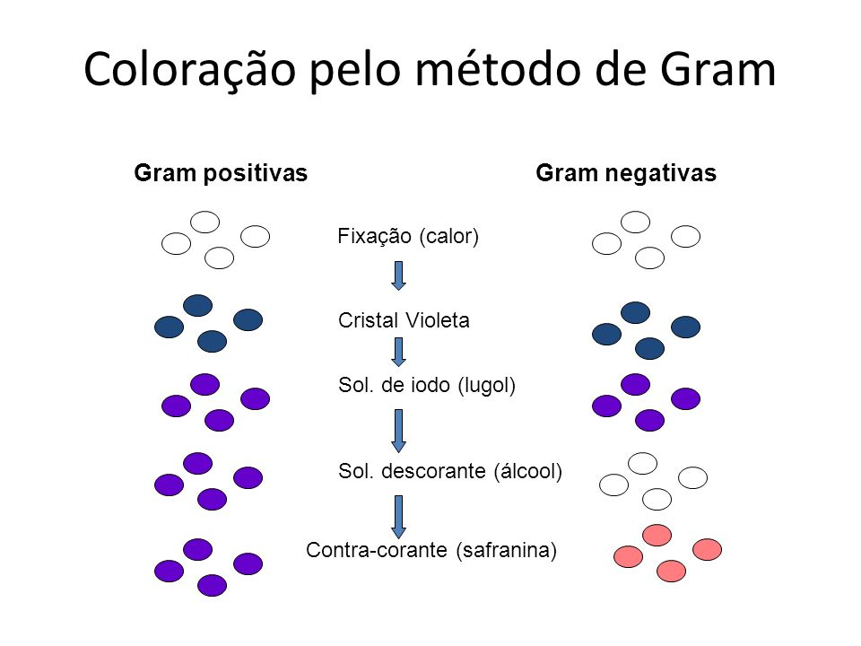 Coloração pelo método de Gram
