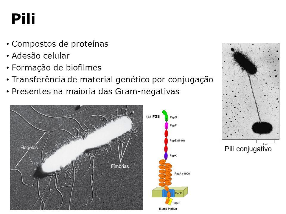 Pili Compostos de proteínas Adesão celular Formação de biofilmes