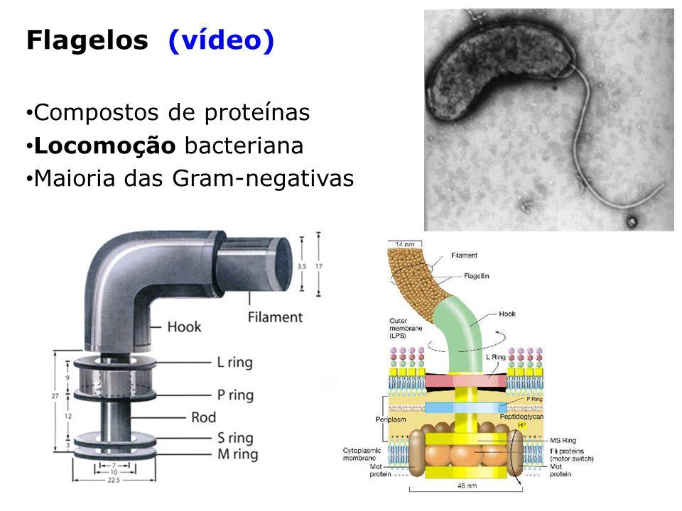 Flagelos (vídeo) Compostos de proteínas Locomoção bacteriana