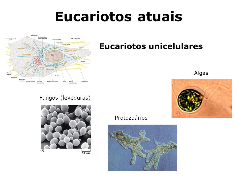 Eucariotos unicelulares