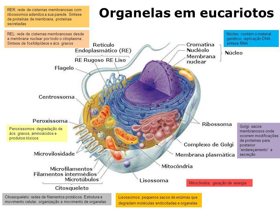 Organelas em eucariotos