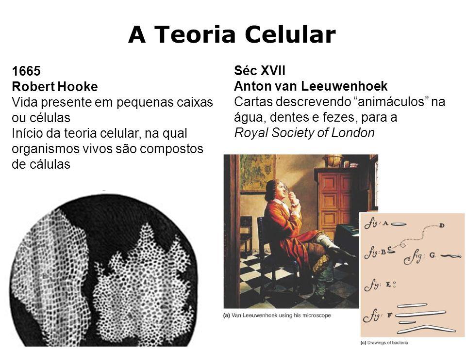 A Teoria Celular 1665 Séc XVII Robert Hooke Anton van Leeuwenhoek