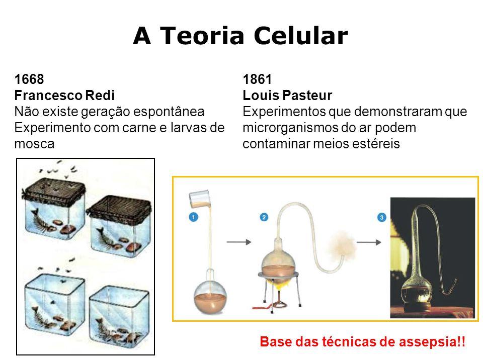 A Teoria Celular 1668 Francesco Redi Não existe geração espontânea