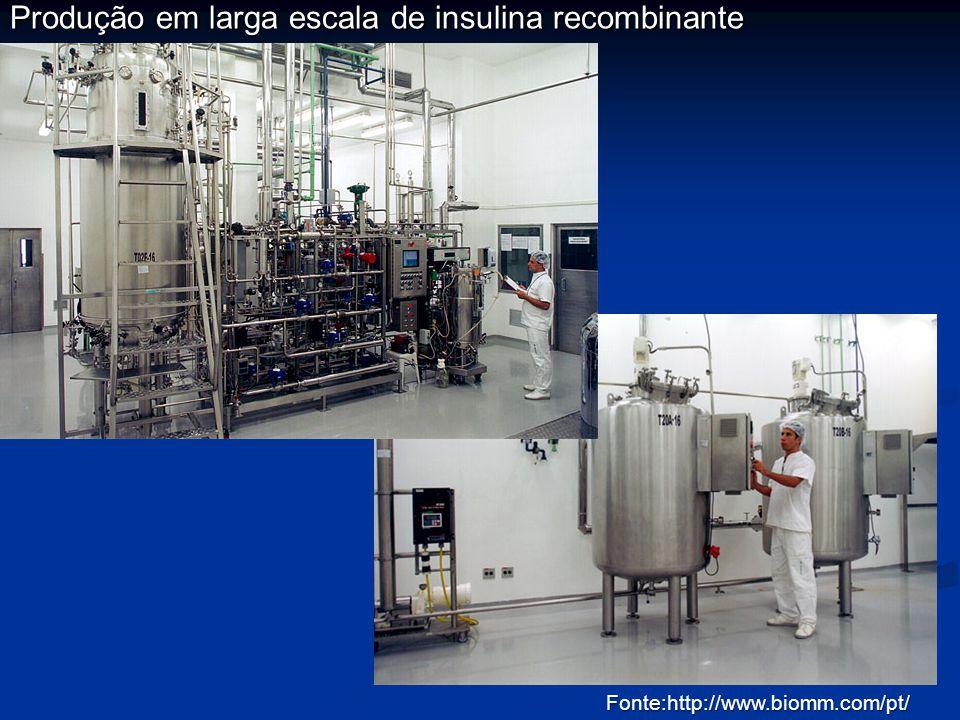 Produção em larga escala de insulina recombinante