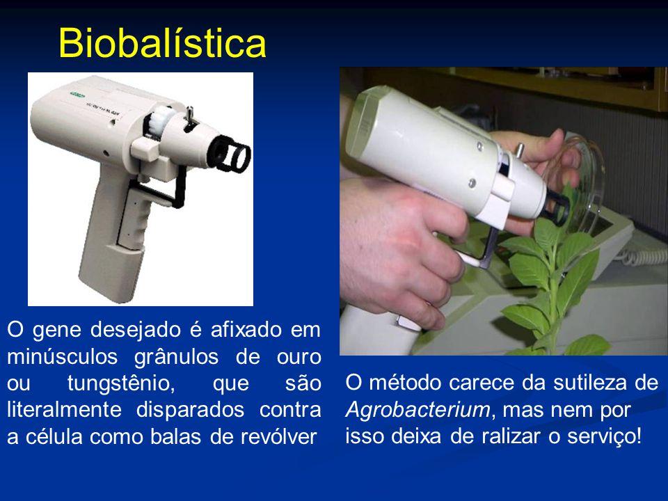 Biobalística