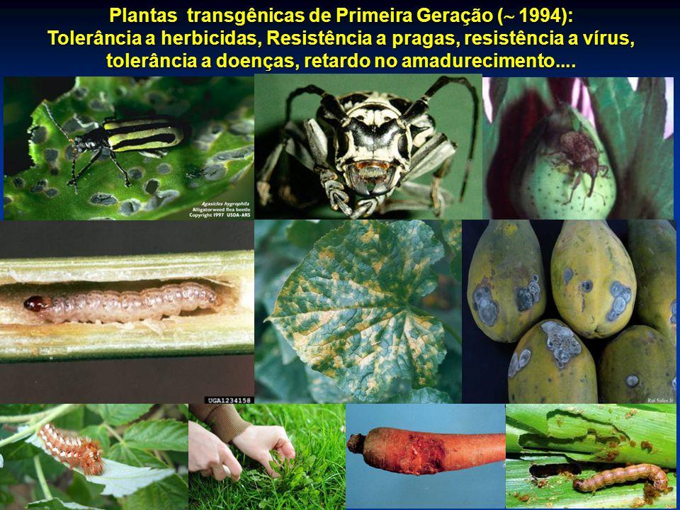 Plantas transgênicas de Primeira Geração ( 1994):