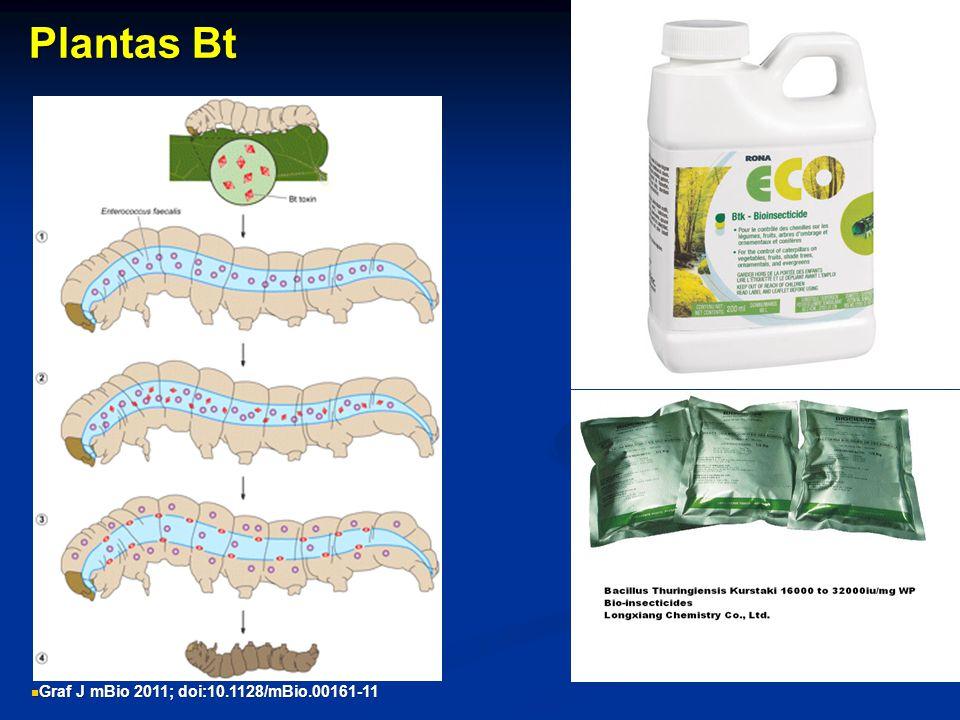Plantas Bt Graf J mBio 2011; doi:10.1128/mBio.00161-11