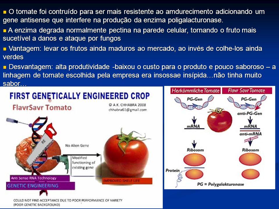 O tomate foi contruído para ser mais resistente ao amdurecimento adicionando um gene antisense que interfere na produção da enzima poligalacturonase.