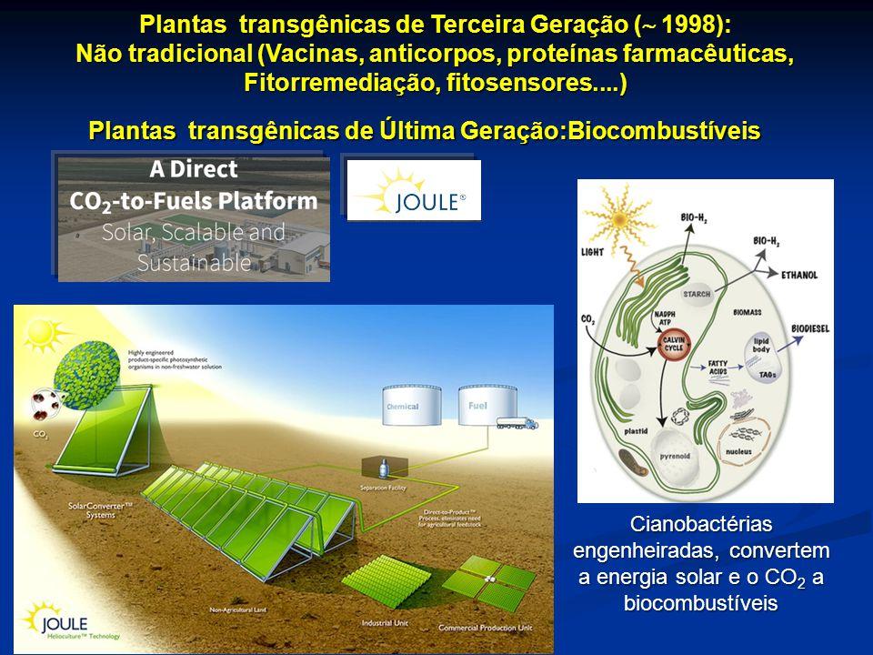 Plantas transgênicas de Terceira Geração ( 1998):