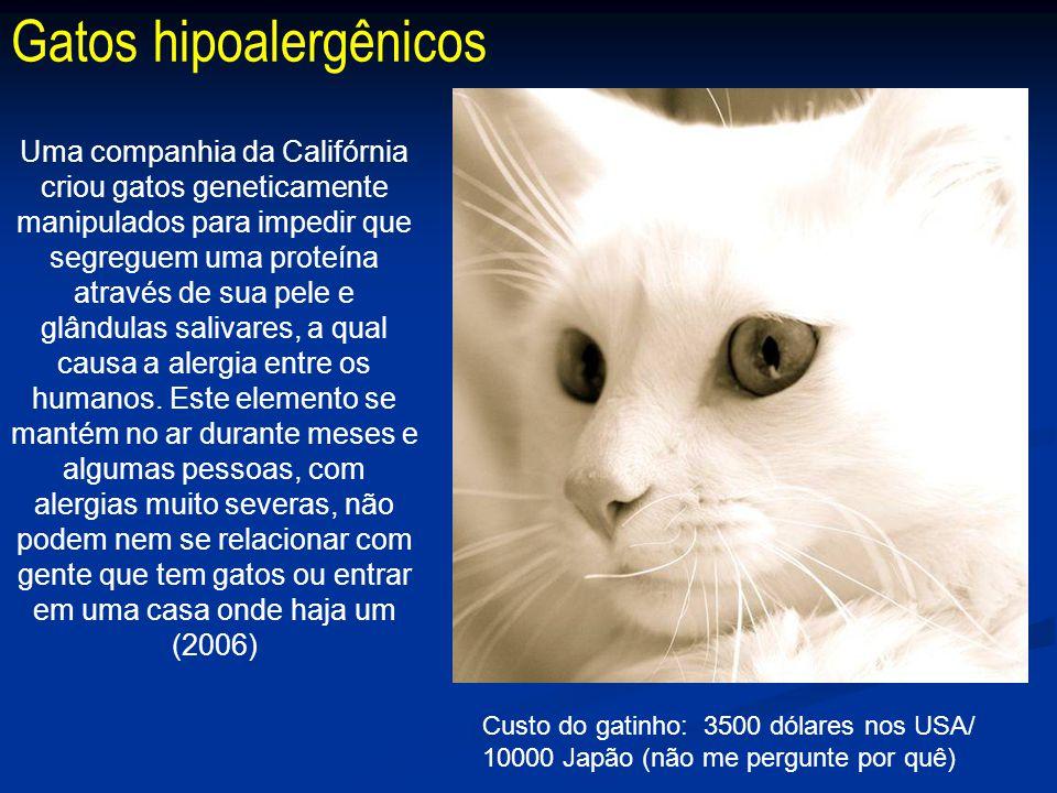Gatos hipoalergênicos