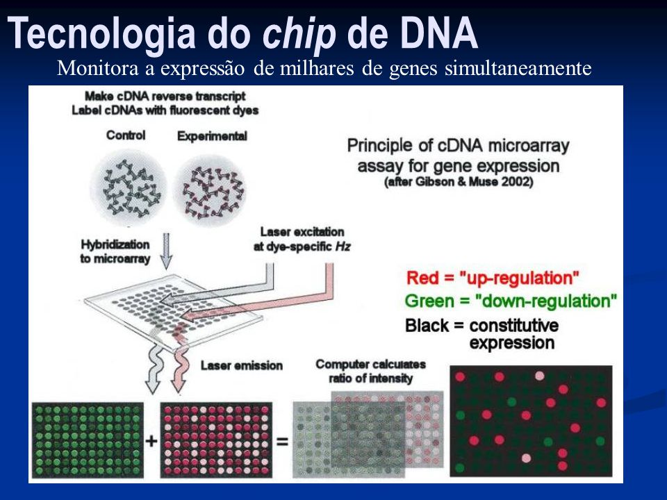 Tecnologia do chip de DNA