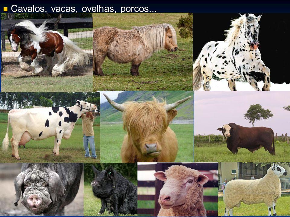 Cavalos, vacas, ovelhas, porcos...