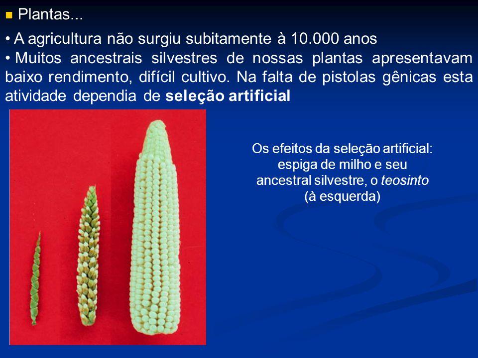 A agricultura não surgiu subitamente à 10.000 anos