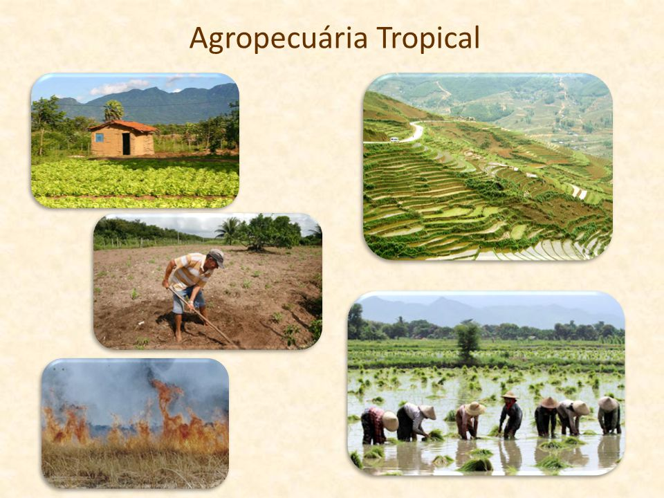Agropecuária Tropical