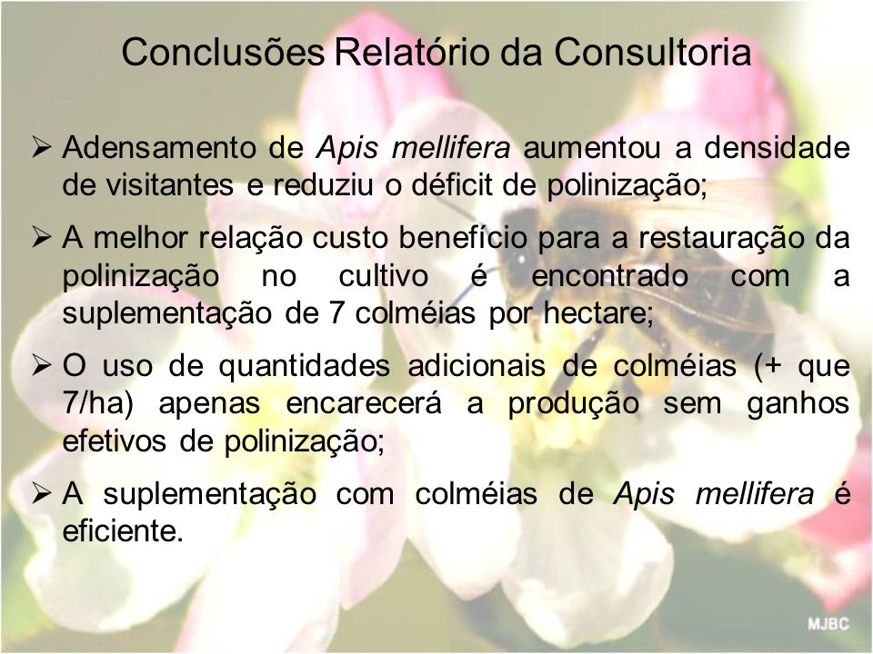 Conclusões Relatório da Consultoria