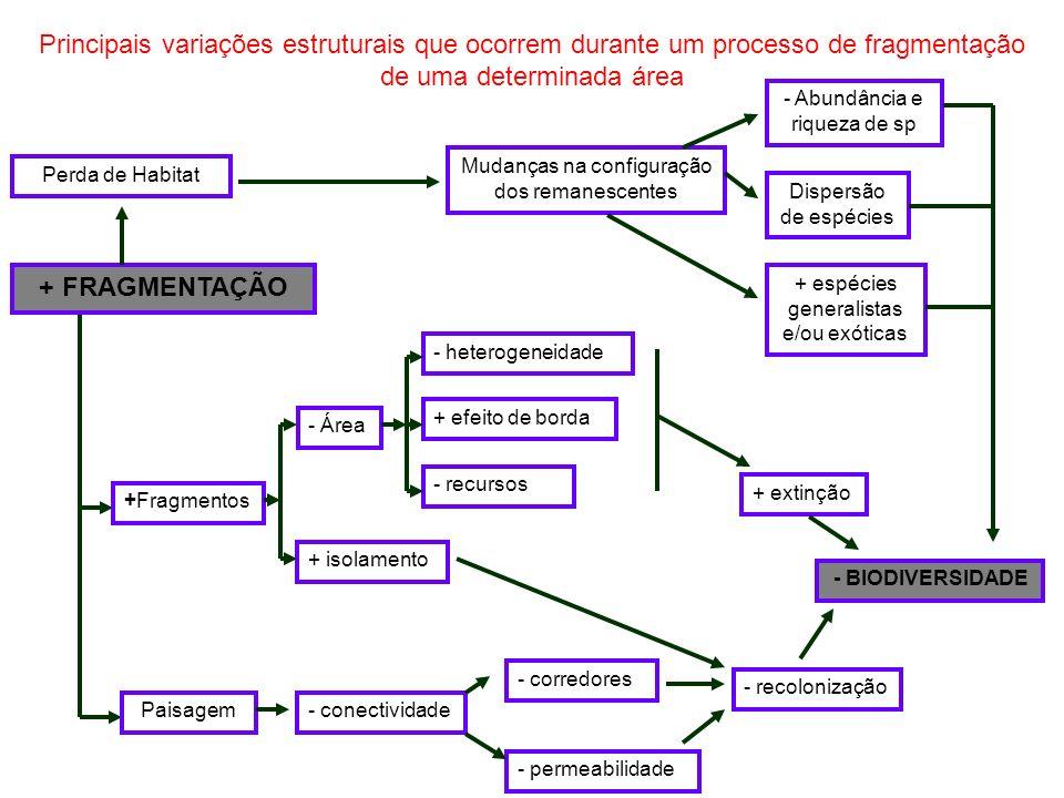 Principais variações estruturais que ocorrem durante um processo de fragmentação de uma determinada área