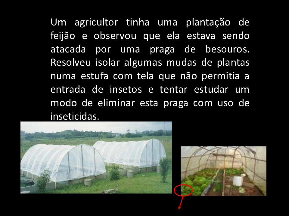 Um agricultor tinha uma plantação de feijão e observou que ela estava sendo atacada por uma praga de besouros.