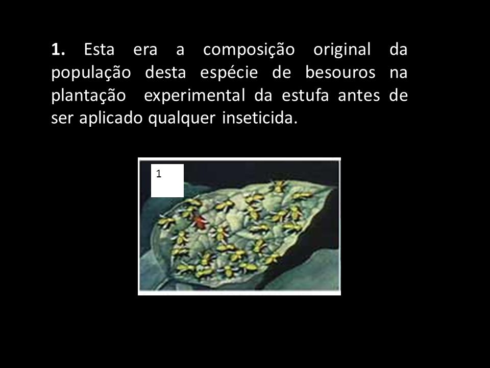 1. Esta era a composição original da população desta espécie de besouros na plantação experimental da estufa antes de ser aplicado qualquer inseticida.