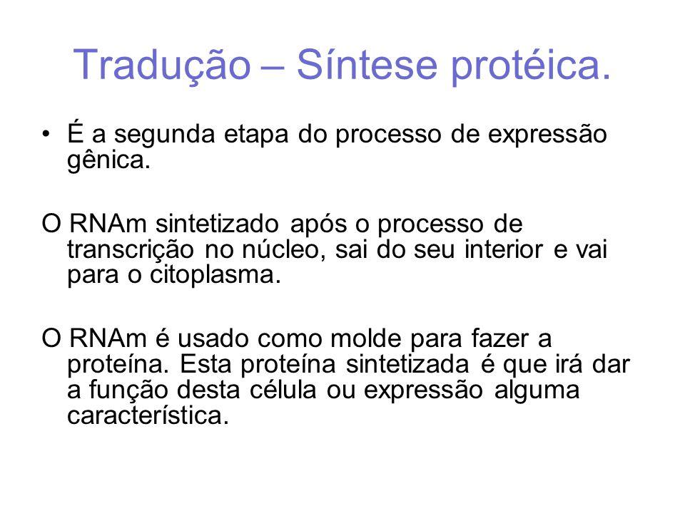 Tradução – Síntese protéica.
