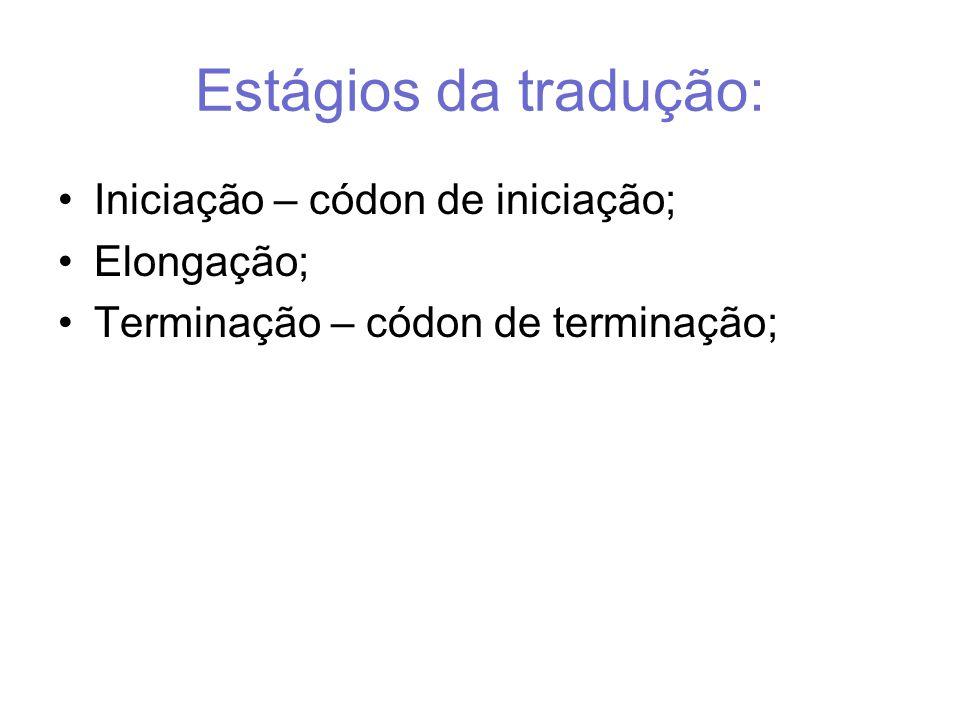 Estágios da tradução: Iniciação – códon de iniciação; Elongação;