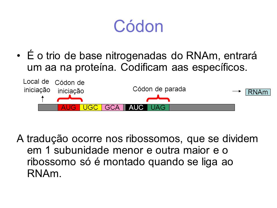 Códon É o trio de base nitrogenadas do RNAm, entrará um aa na proteína. Codificam aas específicos.
