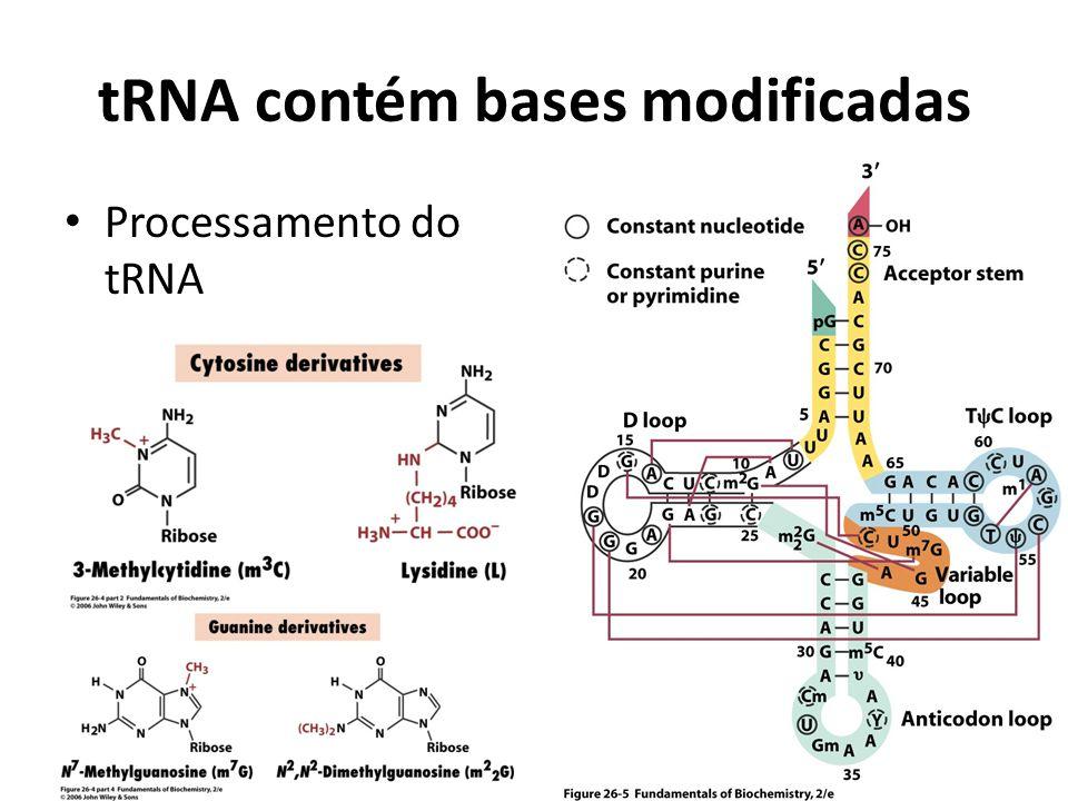 tRNA contém bases modificadas