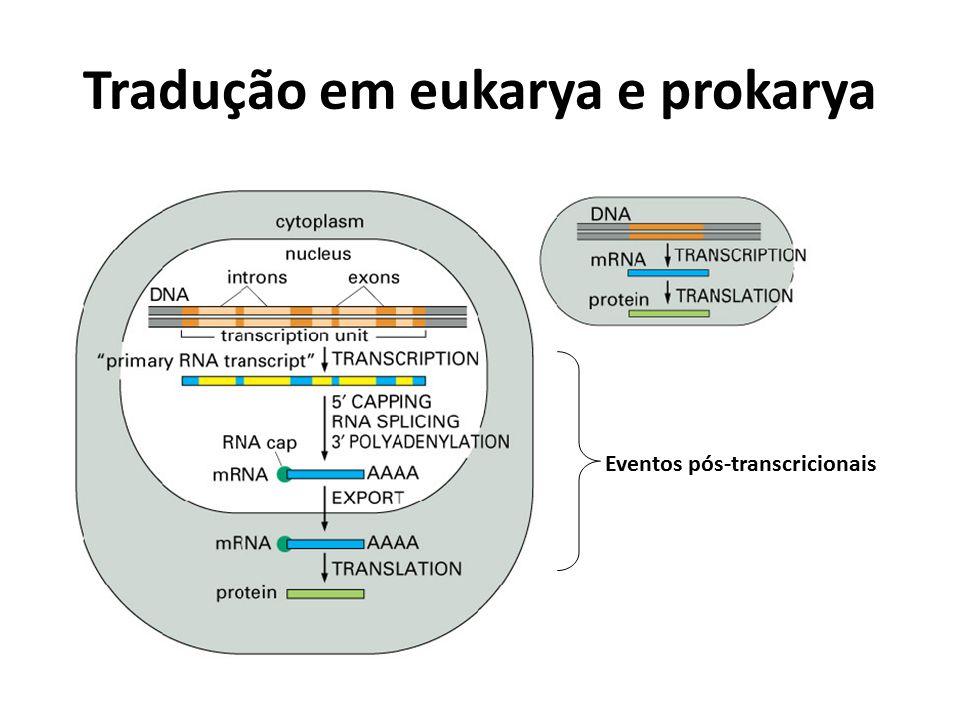 Tradução em eukarya e prokarya