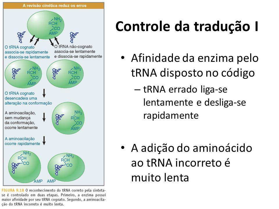 Controle da tradução I Afinidade da enzima pelo tRNA disposto no código. tRNA errado liga-se lentamente e desliga-se rapidamente.