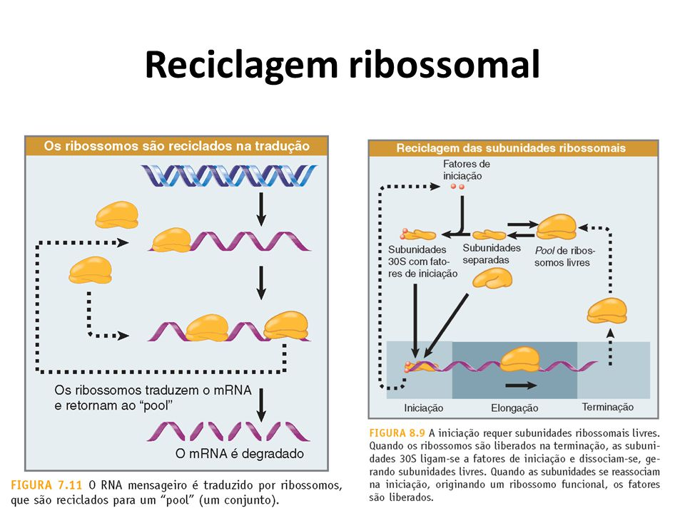 Reciclagem ribossomal