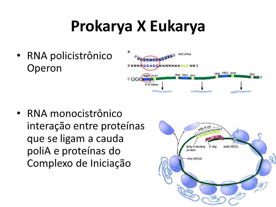 Prokarya X Eukarya RNA policistrônico Operon
