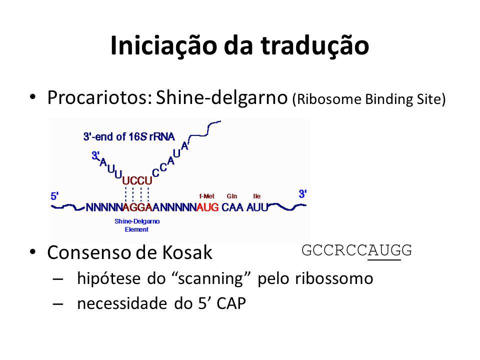 Iniciação da tradução Procariotos: Shine-delgarno (Ribosome Binding Site) Consenso de Kosak. hipótese do scanning pelo ribossomo.